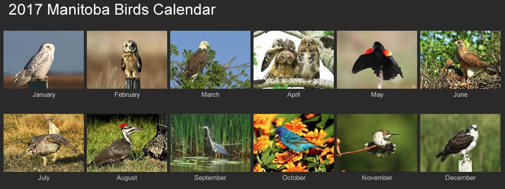 2017 manitoba birds calendar