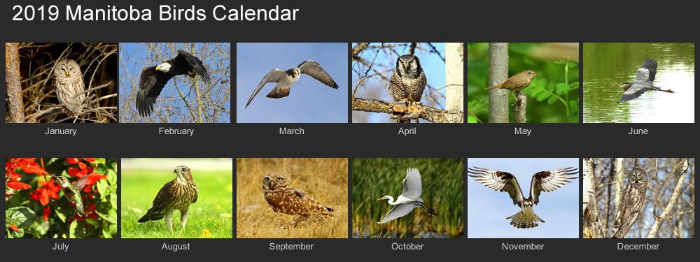 2019 manitoba birds calendar